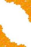 рамка предпосылки флористическая Стоковые Фото