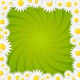 Рамка предпосылки вектора весны естественная переплетенная Стоковое Фото
