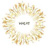 Рамка пшеницы для иллюстрации ярлыка или карточки хлебопекарни Стоковое Изображение