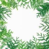 Рамка рождества круглая сделанная деревьев зимы на белой предпосылке Концепция рождества или Нового Года Плоское положение, взгля Стоковая Фотография RF