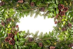 Рамка рождества ветвей сосны - изолированных на белизне Стоковая Фотография