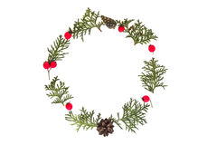 Рамка рождества сделанная зеленых хворостин туи, конусов сосны и красного одичалого подняла плодоовощи на белой предпосылке Взгля Стоковая Фотография