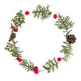 Рамка рождества сделанная зеленых хворостин туи, конусов сосны и красного одичалого подняла плодоовощи на белой предпосылке Взгля Стоковое Фото