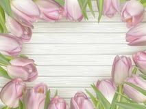 Рамка розовых тюльпанов 10 eps Стоковое Изображение RF