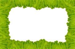Рамка салата Стоковые Изображения RF