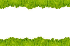 Рамка салата Стоковое Изображение