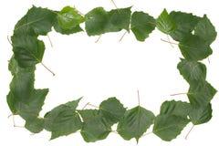 Рамка сделанная из листьев березы Стоковая Фотография