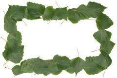 Рамка сделанная из листьев березы Стоковая Фотография RF