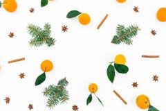 Рамка сделанная цитруса при изолированные листья и ветви ели на белой предпосылке Плоское положение Взгляд сверху Стоковые Изображения