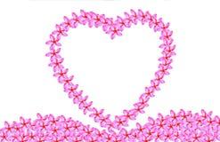Рамка сердца цветка flumeria Стоковая Фотография RF