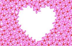 Рамка сердца цветка flumeria Стоковое Фото