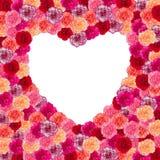 Рамка сердца цветка гвоздики Стоковые Фотографии RF