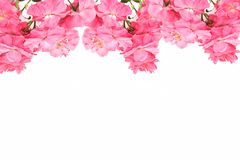 Рамка симпатичных розовых роз на белой предпосылке Зацветите доска для влюбленности, валентинка, мать, женщины Тема приветствию с Стоковая Фотография RF