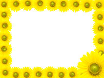 Рамка солнцецвета Стоковая Фотография RF