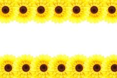Рамка солнцецвета Стоковые Фотографии RF