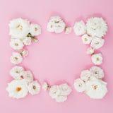 Рамка сделанная белых роз на розовой предпосылке Плоское положение, взгляд сверху playnig света цветка предпосылки цветет иллюстр Стоковое Изображение RF