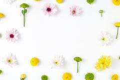 Рамка сделанная различных хризантем флористическая белизна картины Стоковое Изображение RF