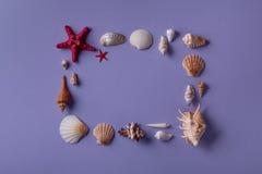 Рамка сделанная seashells Стоковое Изображение RF