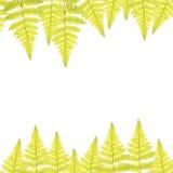 Рамка с зелеными листьями папоротника Стоковое Фото