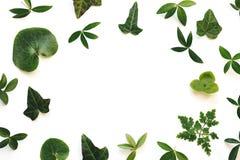 Рамка с листьями стоковые изображения rf