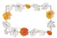 Рамка с листьями осени различных деревьев Стоковое Изображение