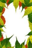 Рамка с свежей границей листьев Стоковые Изображения
