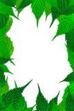 Рамка с свежей границей листьев Стоковое фото RF