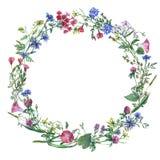 Рамка с травами лета, луг границы венка цветет иллюстрация штока