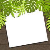 Рамка с тропическими заводами и листьями на темной коричневой деревянной предпосылке иллюстрация штока