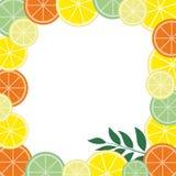 Рамка с тропическими плодоовощами и листьями Конструируйте для рекламировать буклеты, ярлыки, упаковывая, меню Стоковые Изображения