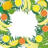 Рамка с тропическими плодоовощами и листьями Конструируйте для рекламировать буклеты, ярлыки, упаковывая, меню Стоковая Фотография RF
