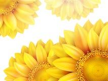 Рамка с цветком, гайками и грибами 10 eps Стоковое Изображение