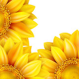 Рамка с цветком, гайками и грибами 10 eps Стоковое Фото