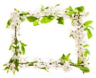 Рамка с blossoming ветвями вишни Стоковые Фото