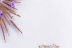 Рамка текста цветка травы Стоковое Изображение RF