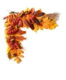 Рамка, угол листьев осени и плодоовощи Стоковые Фото