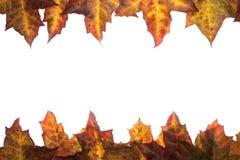 Рамка упаденных листьев с местом для вашего текста стоковые изображения