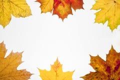 Рамка упаденных листьев с местом для вашего текста стоковое изображение