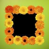Рамка фото красивого лета флористическая Стоковые Изображения