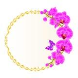 Рамка флористического вектора круглая золотая с пурпуром орхидей цветет фаленопсис тропических заводов и милый малый год сбора ви Стоковое фото RF