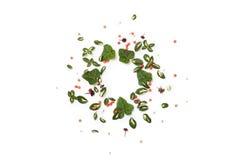 Рамка флористической природы круглая на белой предпосылке Плоское положение Стоковое Фото