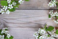 Рамка хворостин вишни птицы на деревянном phyon стоковое изображение