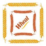 Рамка цвета vegetable квадратная граница ушей золота пшеницы на w Стоковые Изображения