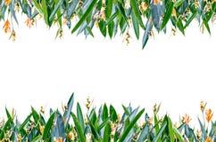 Рамка цветка горизонтальная Стоковые Изображения