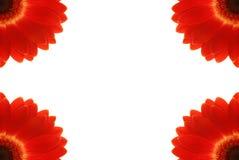 Рамка цветка, изолят на белизне Стоковые Фото