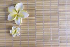 рамка цветка курорта Стоковая Фотография RF