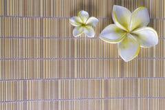рамка цветка курорта Стоковые Изображения