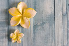 рамка цветка курорта Стоковые Изображения RF