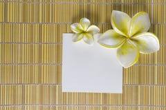 рамка цветка курорта Стоковое Изображение RF