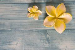 рамка цветка курорта Стоковое Изображение